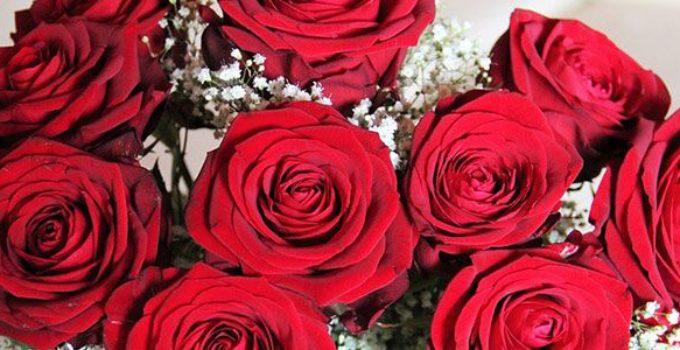 Her ser du roser, som bliver traditionelt brugt til konfirmationer