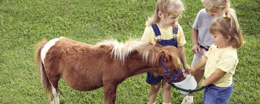 Børnefødselsdag 4 år med en hest og 3 børn