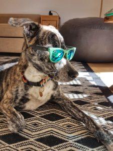 Sjove billeder af hunde