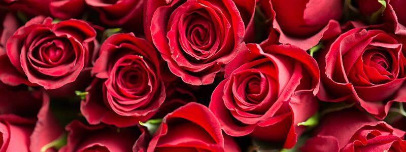 Roser symboliserer romantik